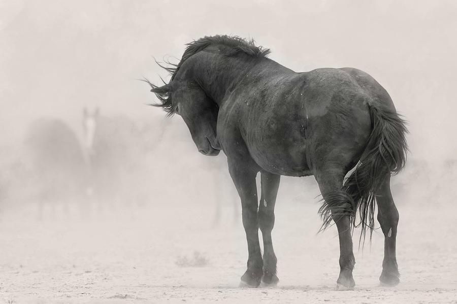 Stoic Stallion. by Paul Martin