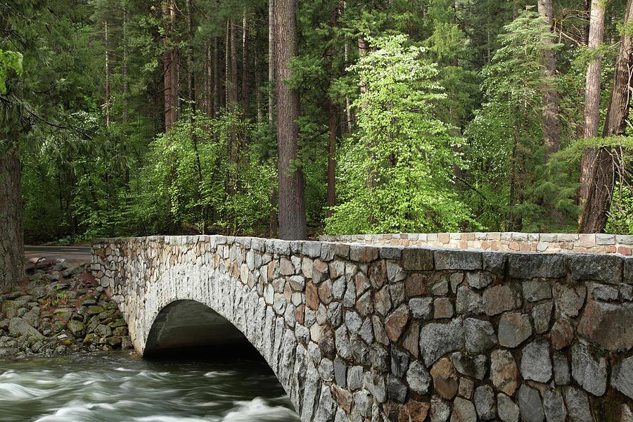Stone Bridge In Forest Photograph by Yenwen