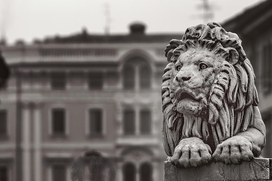 Stone lion by Roberto Pagani