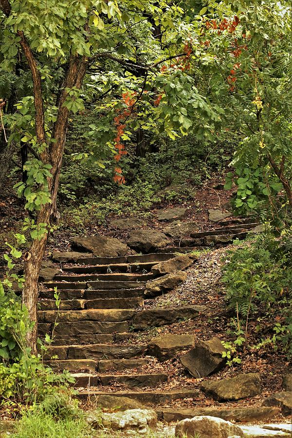 Stone Stairway in the Woods by Sheila Brown