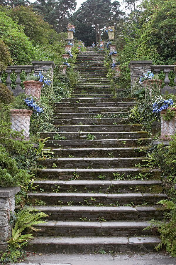 Stone Steps In Garden Photograph by Andrew Holt