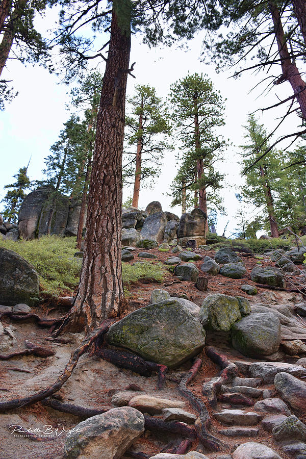 Stonehenge Along The Trail Photograph