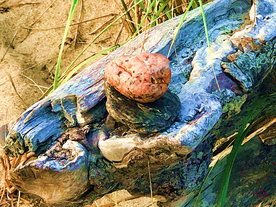 Stones on Drfitwood by Tom Johnson
