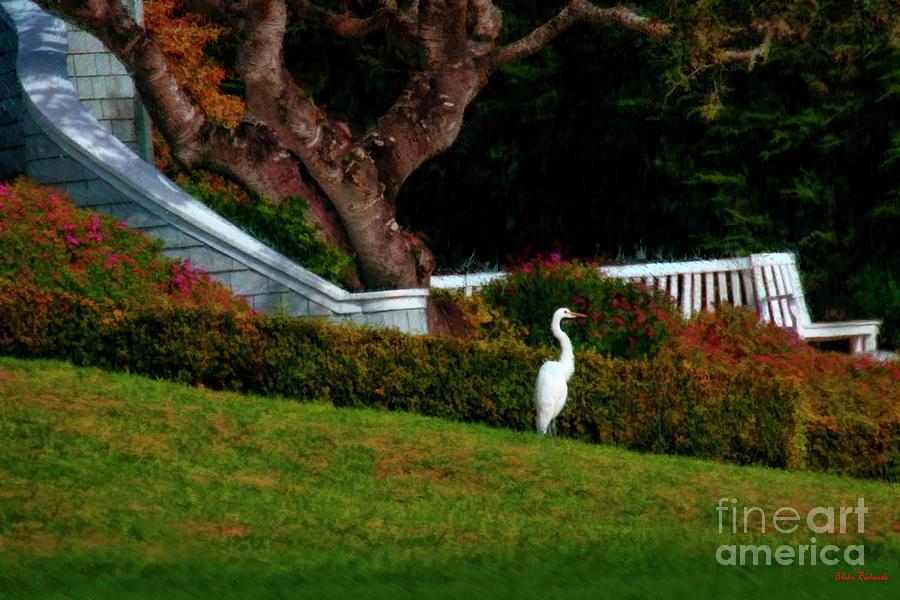 Stork In Paradise by Blake Richards