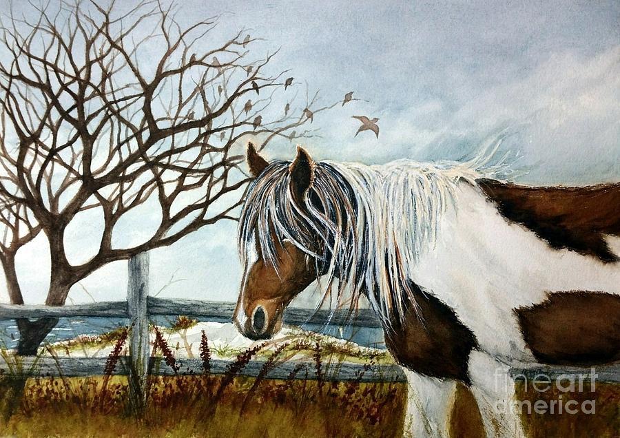 Stormy Island Pony - Assateague Island wild Pony 1 by Janine Riley