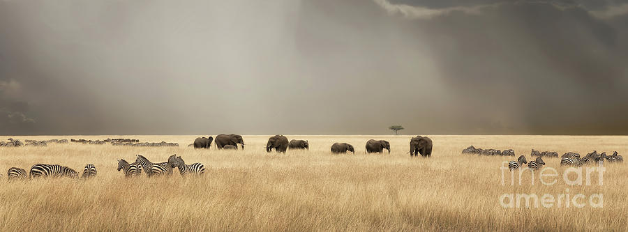 Mara Photograph - Stormy Skies Over The Masai Mara With Elephants And Zebras by Jane Rix