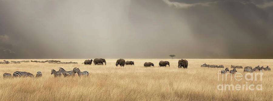 Stormy skies over the masai Mara with elephants and zebras by Jane Rix