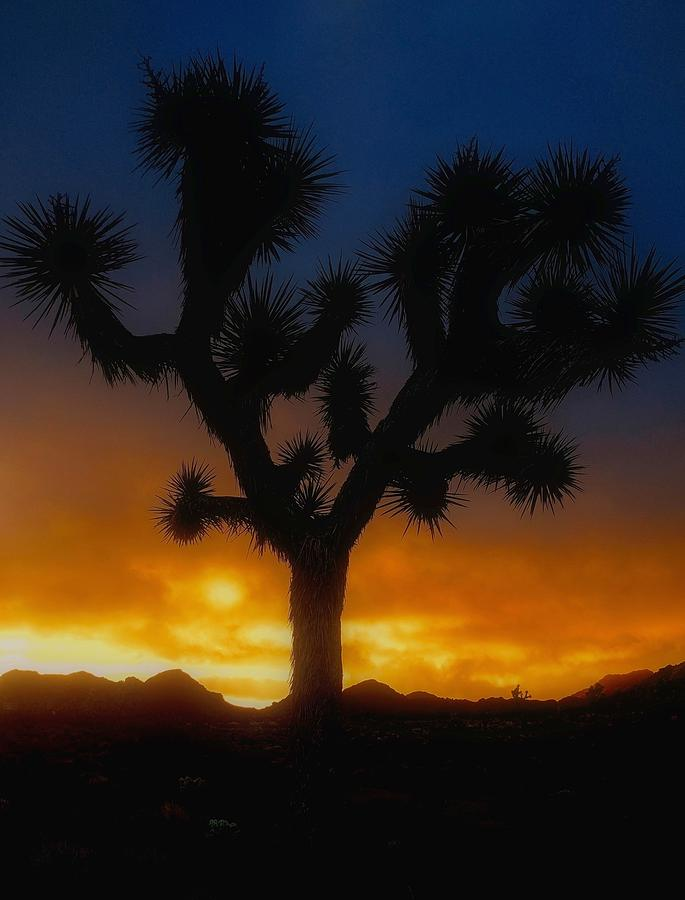 Joshua Tree Photograph - Stormy Sunrise by Unlimited Earth
