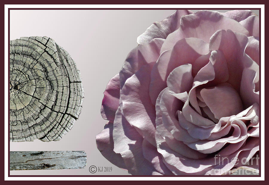 Rose Digital Art - Straight And Curly by Klaus Jaritz