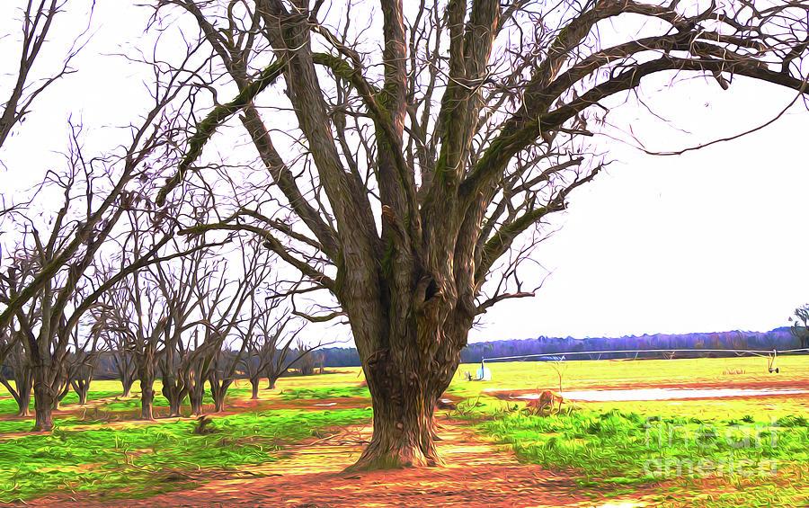 Strange Orchard  by Kim Pate