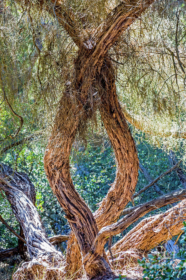 Strange Tree by Kate Brown