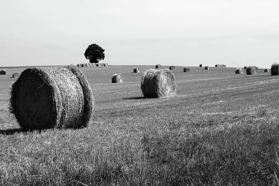 Straw Bale Landscape by Aidan Moran