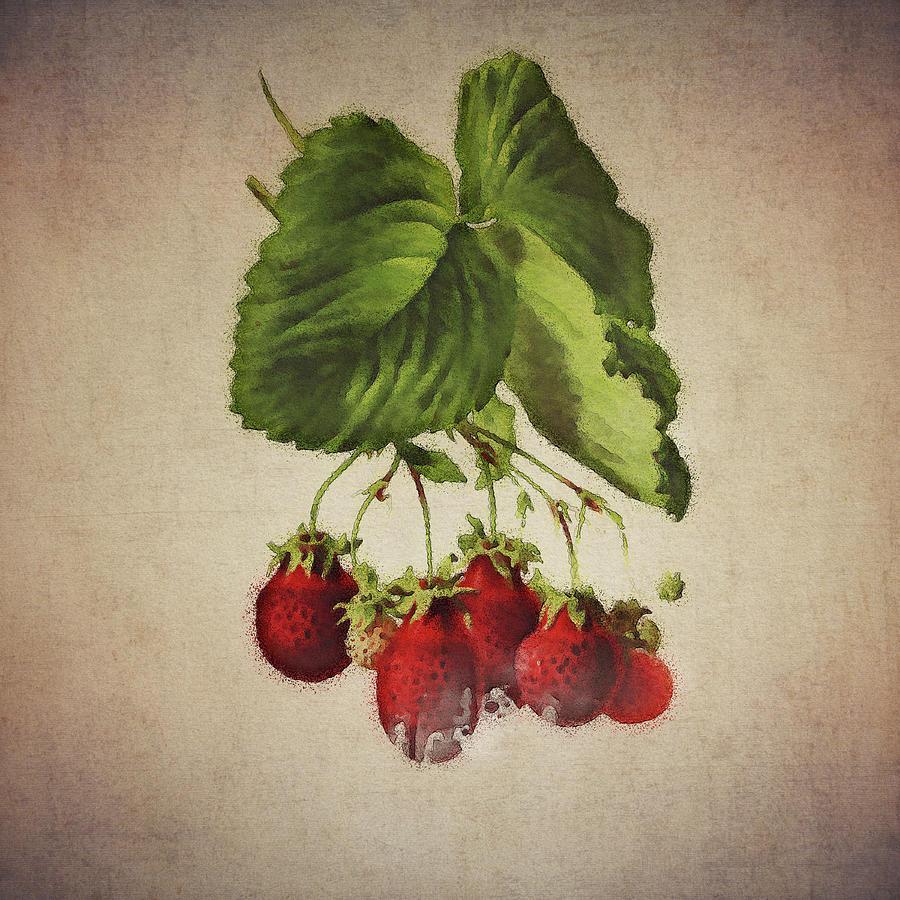 Strawberries by Jan Keteleer