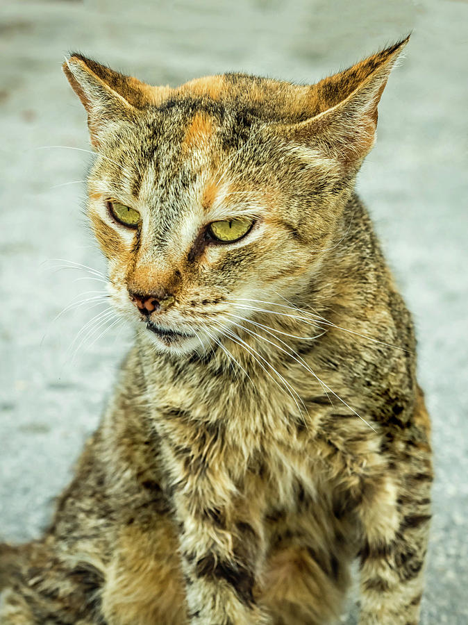 Stray Cat Stare by Nick Bywater