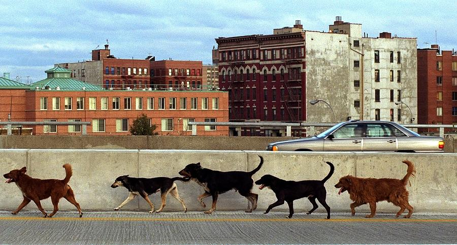 Stray Dogs Stroll Along The Bruckner Photograph by New York Daily News Archive