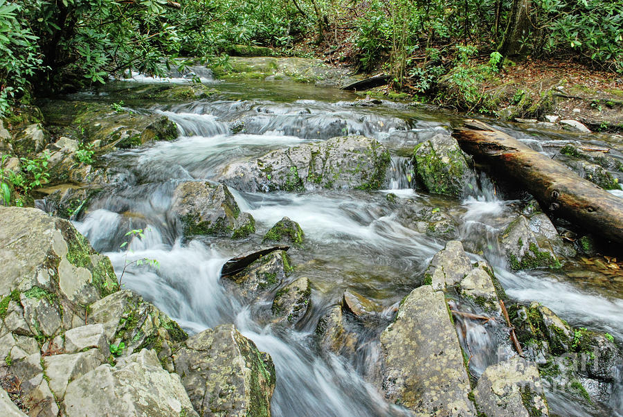 Stream Along The Trail by Phil Perkins