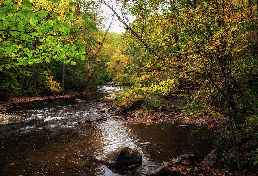Stream in Autumn by Debra Fedchin
