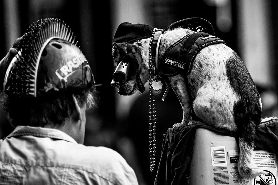 Street dog by Jason Hughes