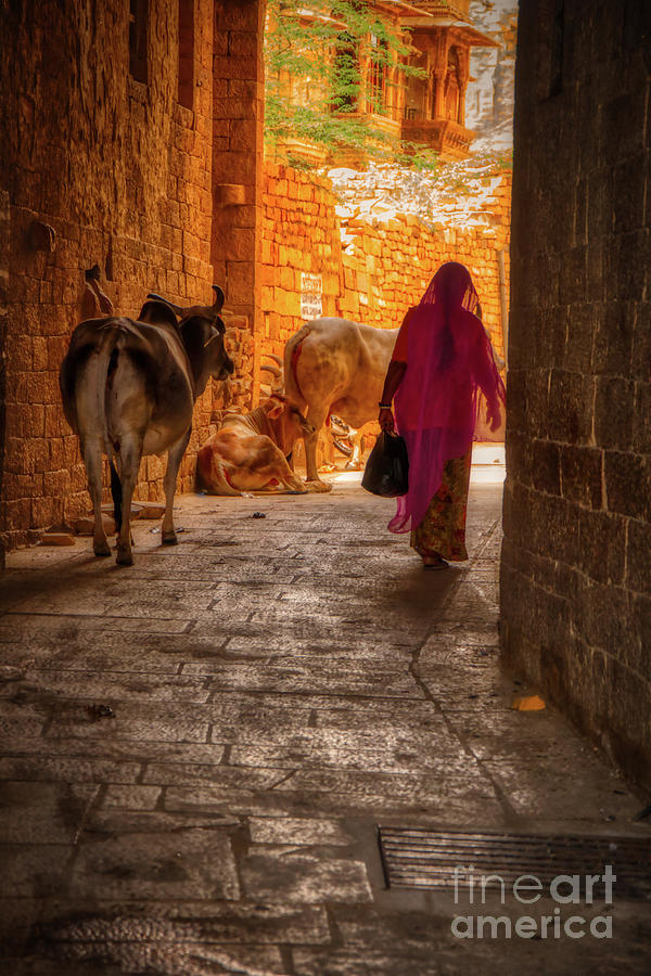 Streets of India by Stefano Senise