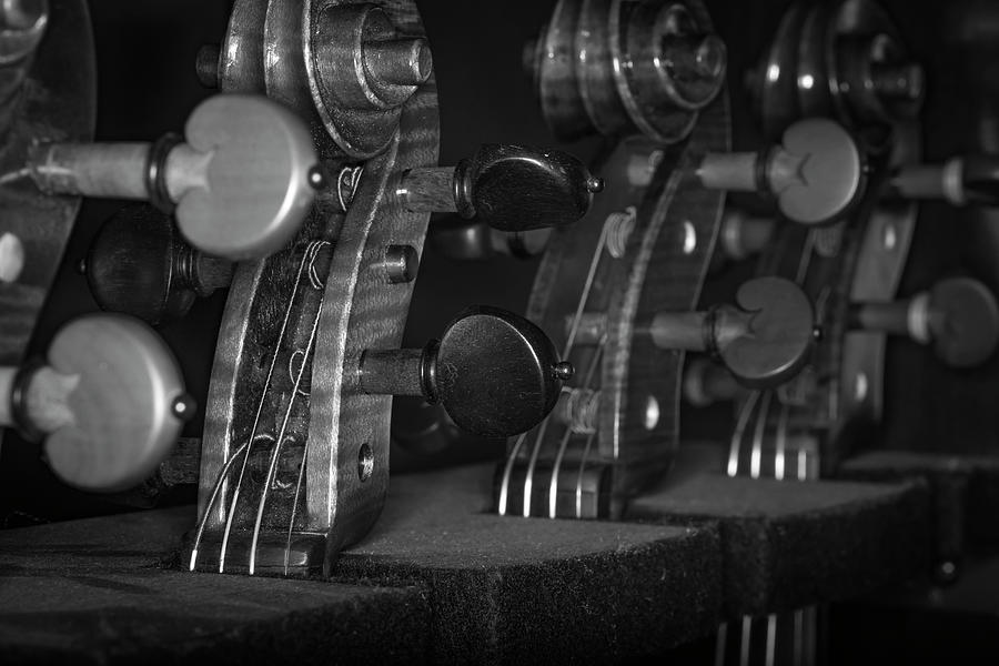 Strings Series 48 Photograph