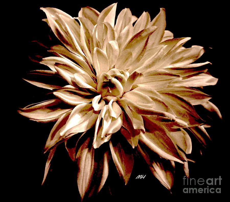 Photo Photograph - Striped Red And Cream Dahlia by Marsha Heiken