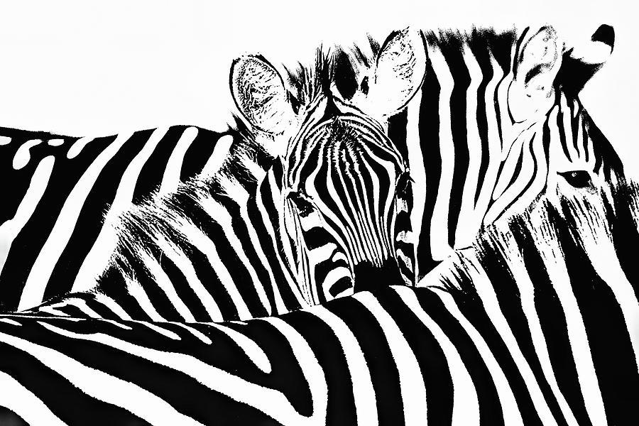 Stripes by Gaye Bentham