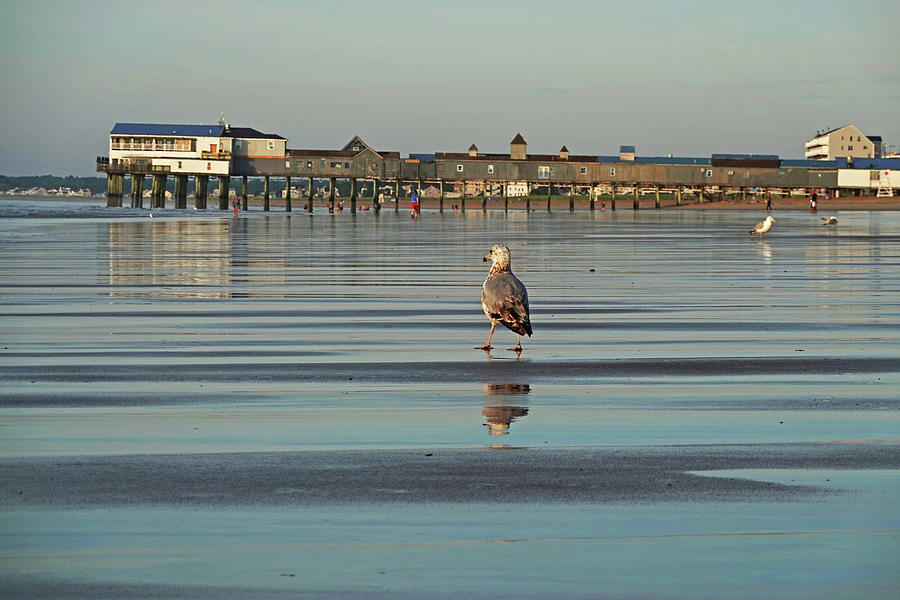 Old Photograph - Strolling Down Old Orchard Beach Maine by Toby McGuire