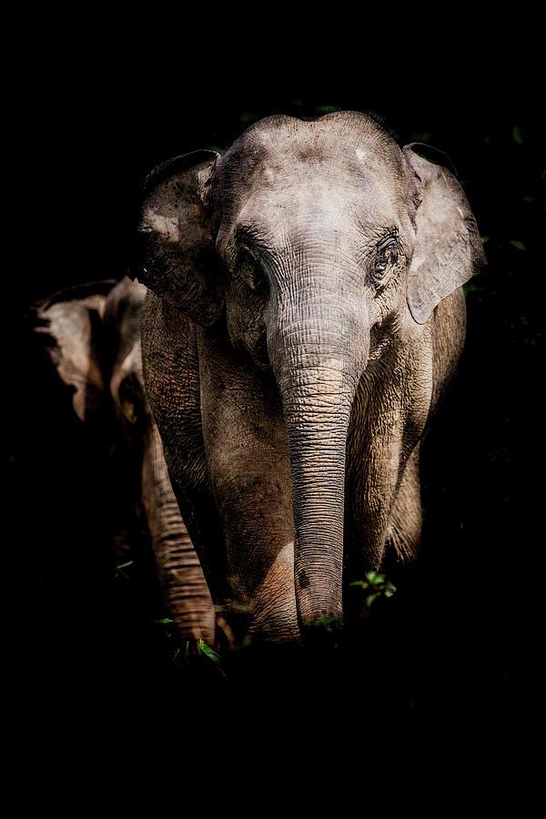 Elephant Photograph - Strong by Felipe Queriquelli