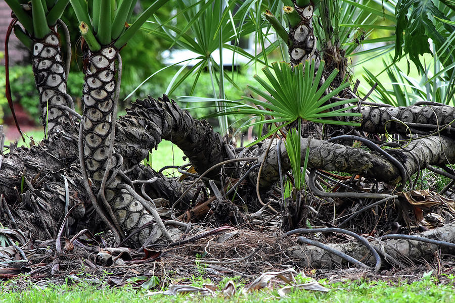 Strong Roots by William Tasker