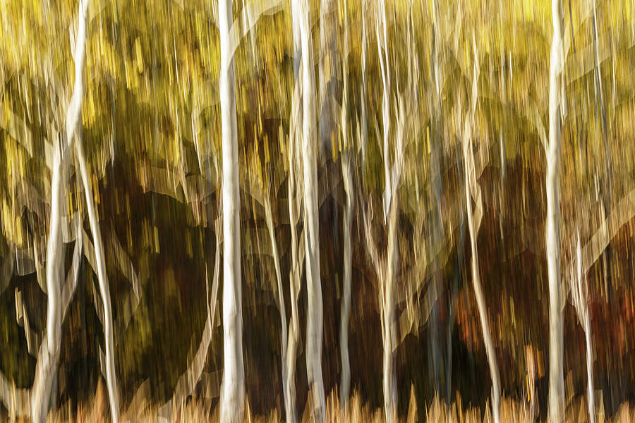 Study In Abstract No. 11, Grand Teton by Ann Skelton