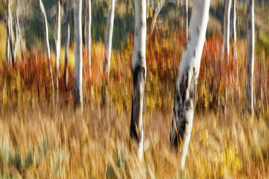 Study In Abstract No. 12, Grand Teton by Ann Skelton