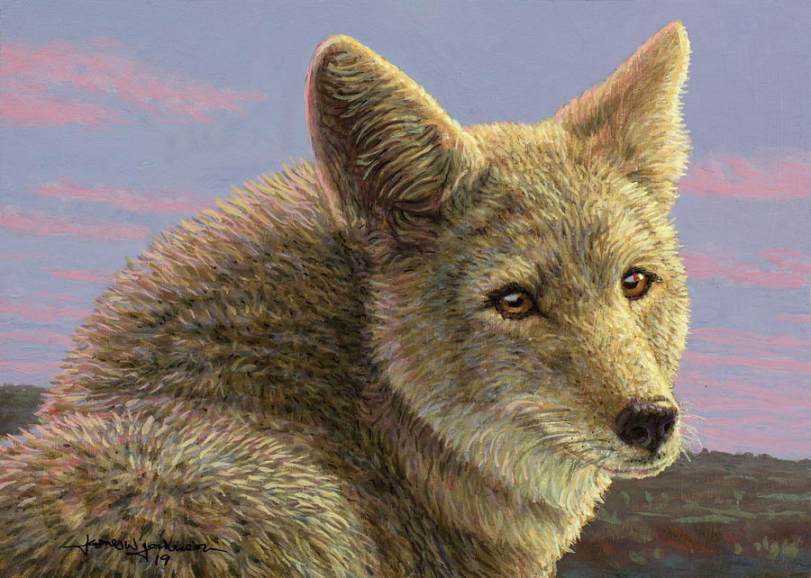 Study of a Coyote by James W Johnson