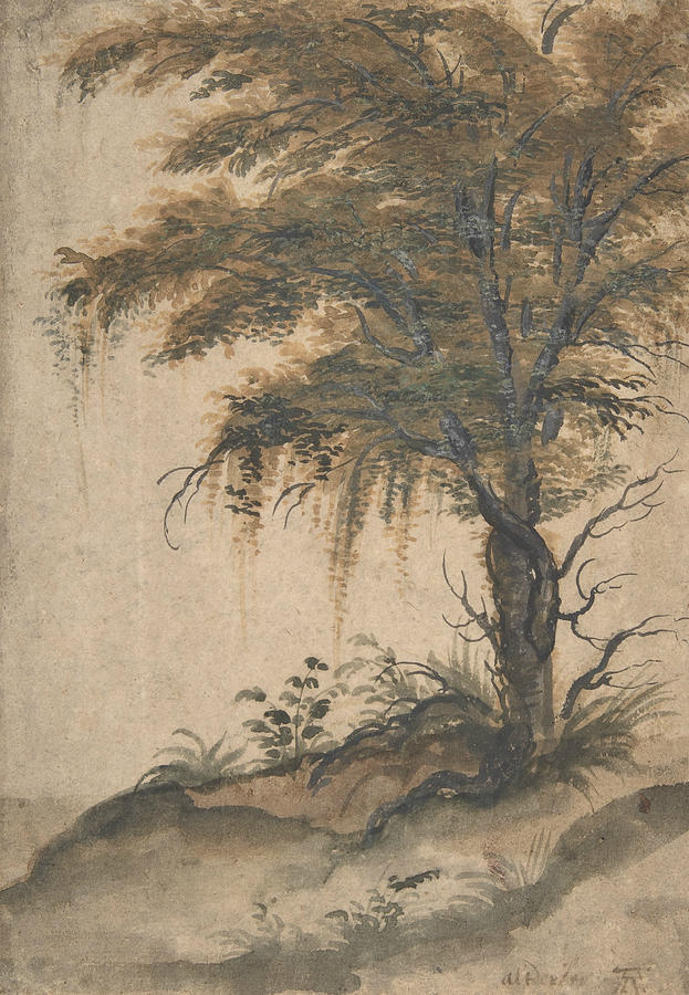 Flemish Painters Drawing - Study Of A Tree by Marten van Valckenborch