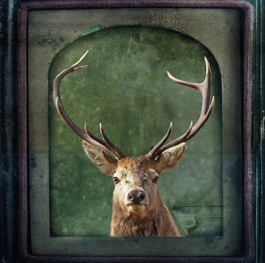 Stag Photograph - Stuffed And Mounted by Andrea Kollo