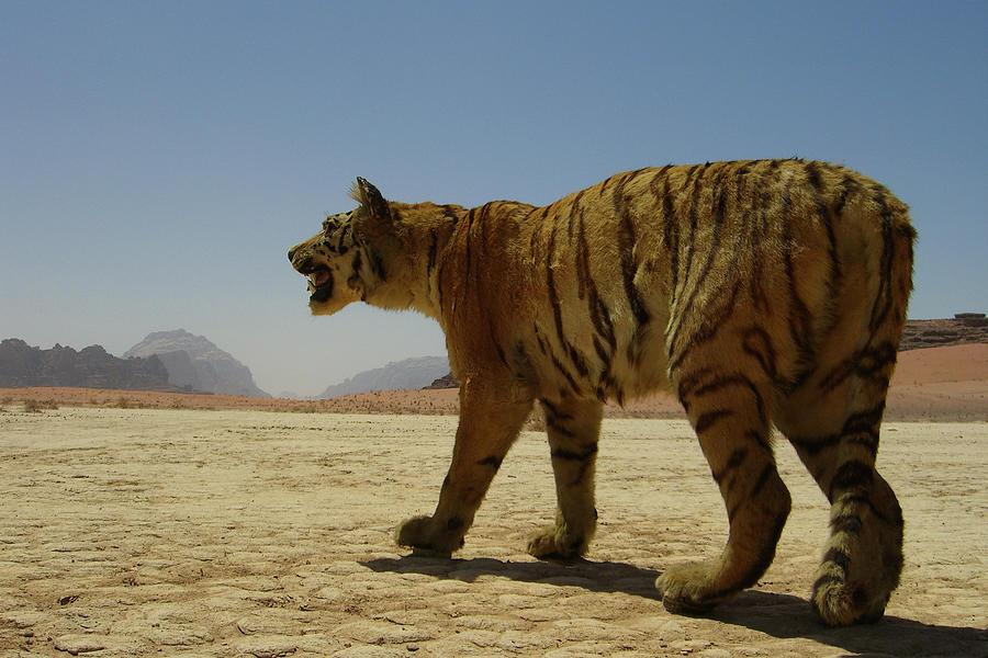 был разделен картинки пустыня и тигр менее, этой странной
