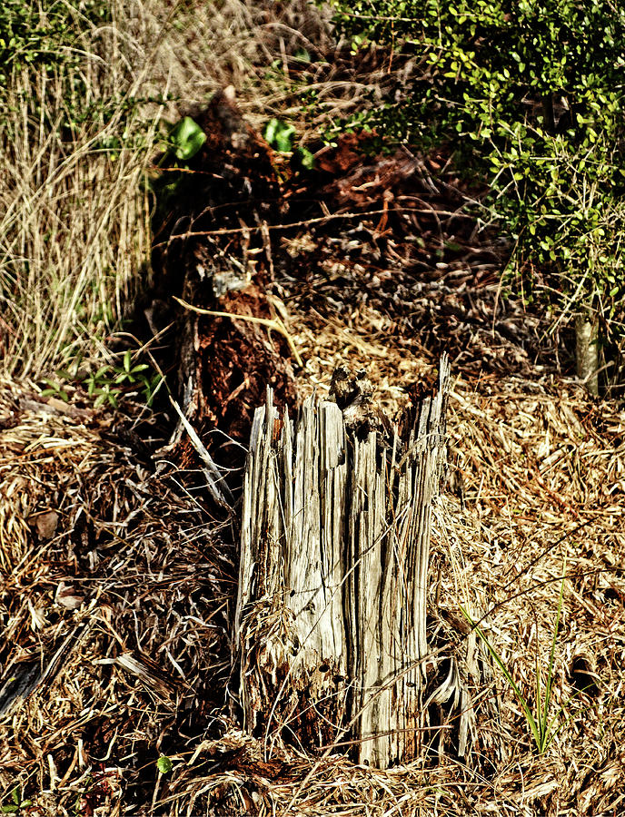 Stump in Swamp by Maggy Marsh