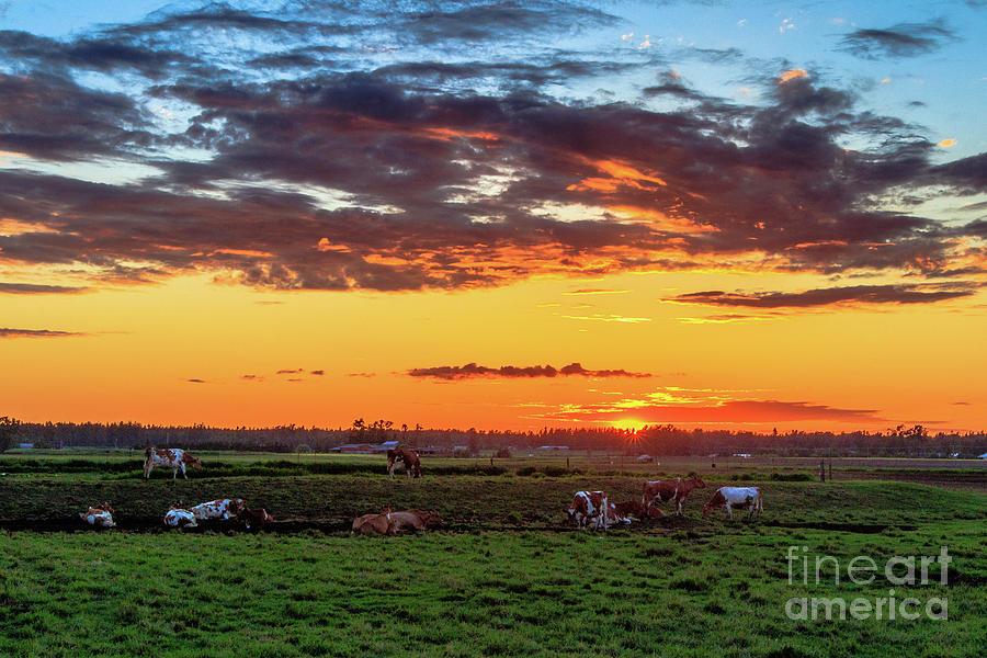 Sunset Orange Stunner