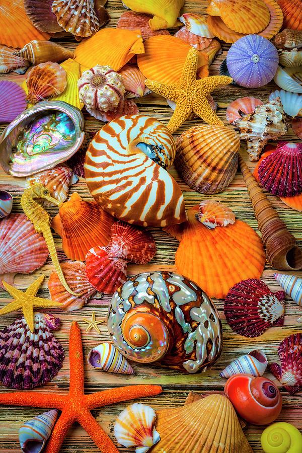 Stunning Seashell Still Life by Garry Gay