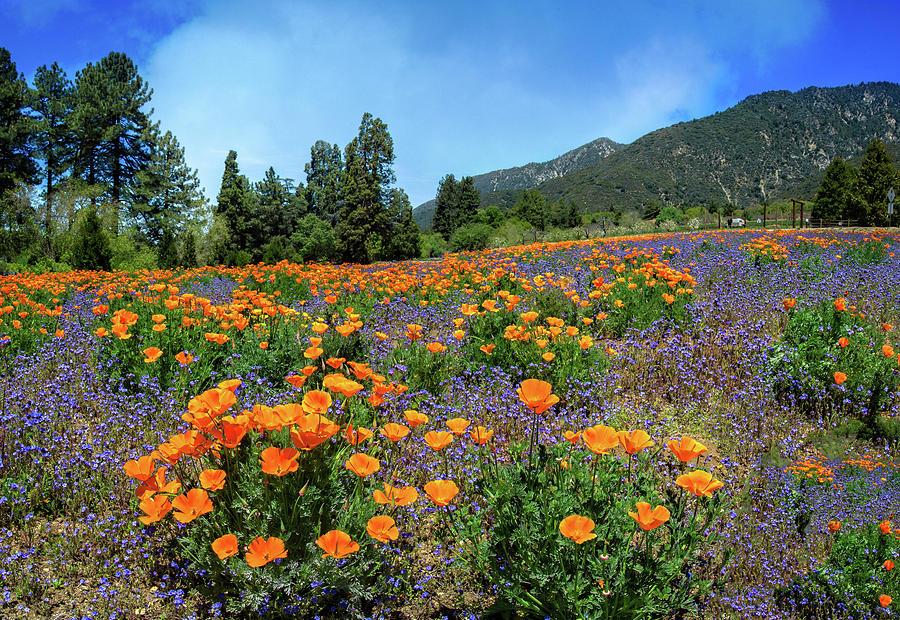 Stunning Wildflowers at the Oak Glen Preserve by Lynn Bauer