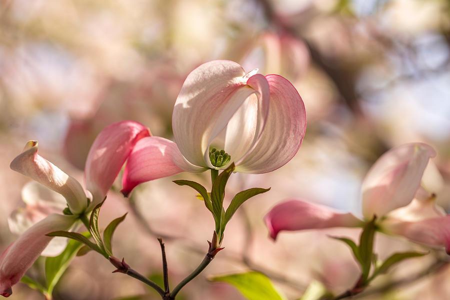 Subtle beauty by Lynn Hopwood