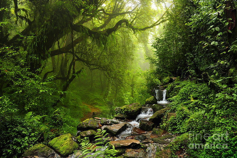 Forest Photograph - Subtropical Forest In Nepal by Quick Shot