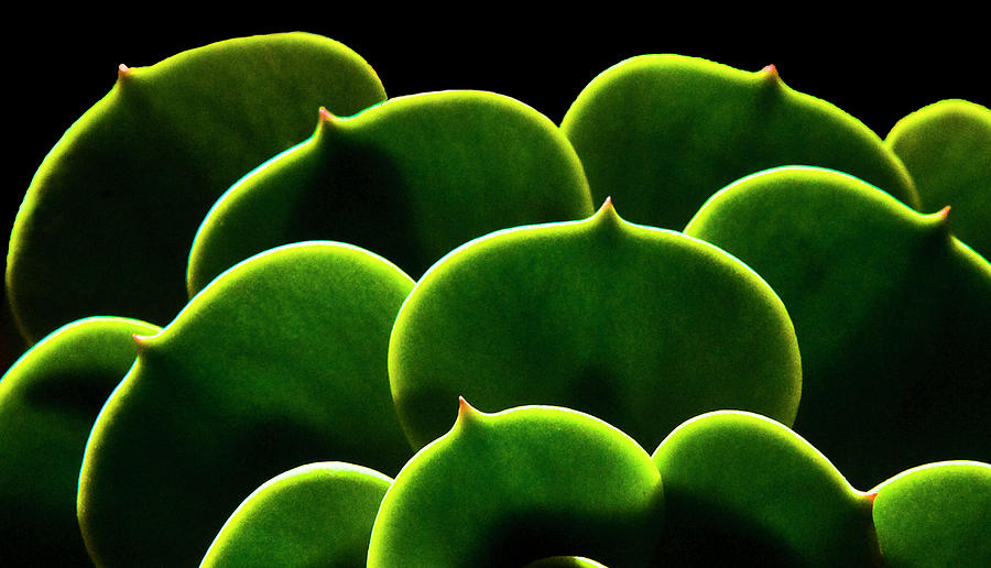 Succulent Photograph by Fogline Studio...photos Of Everythhing That Is Beautiful