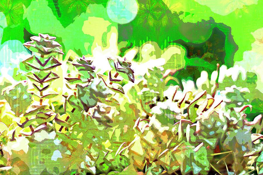 Succulent garden 2 by Jocelyn Friis
