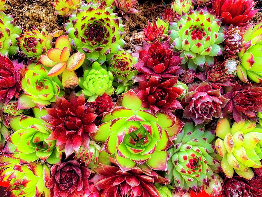 Garden Photograph - Succulent Garden by Garry Gay