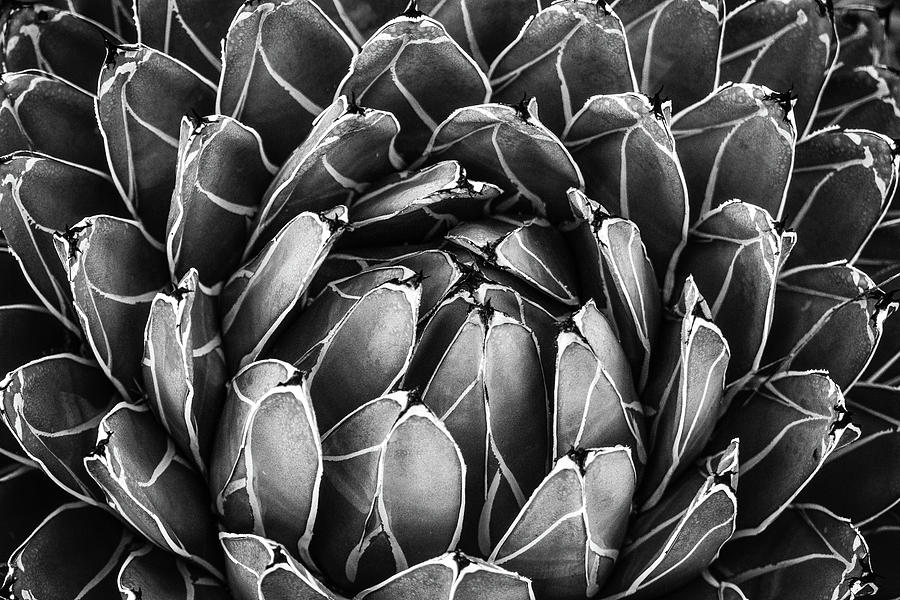 Succulent Leaves by Juliana Swenson