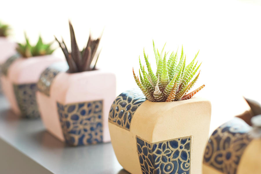Succulent Plants In Potteres In Row Photograph by Lawrenlu
