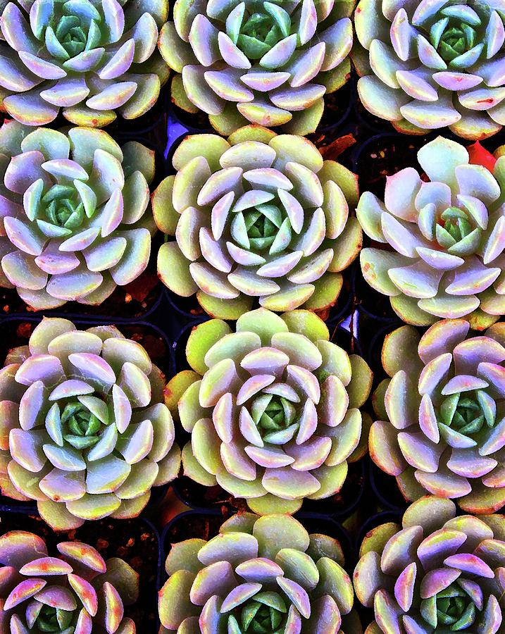 Succulents 1 by Timothy Bulone
