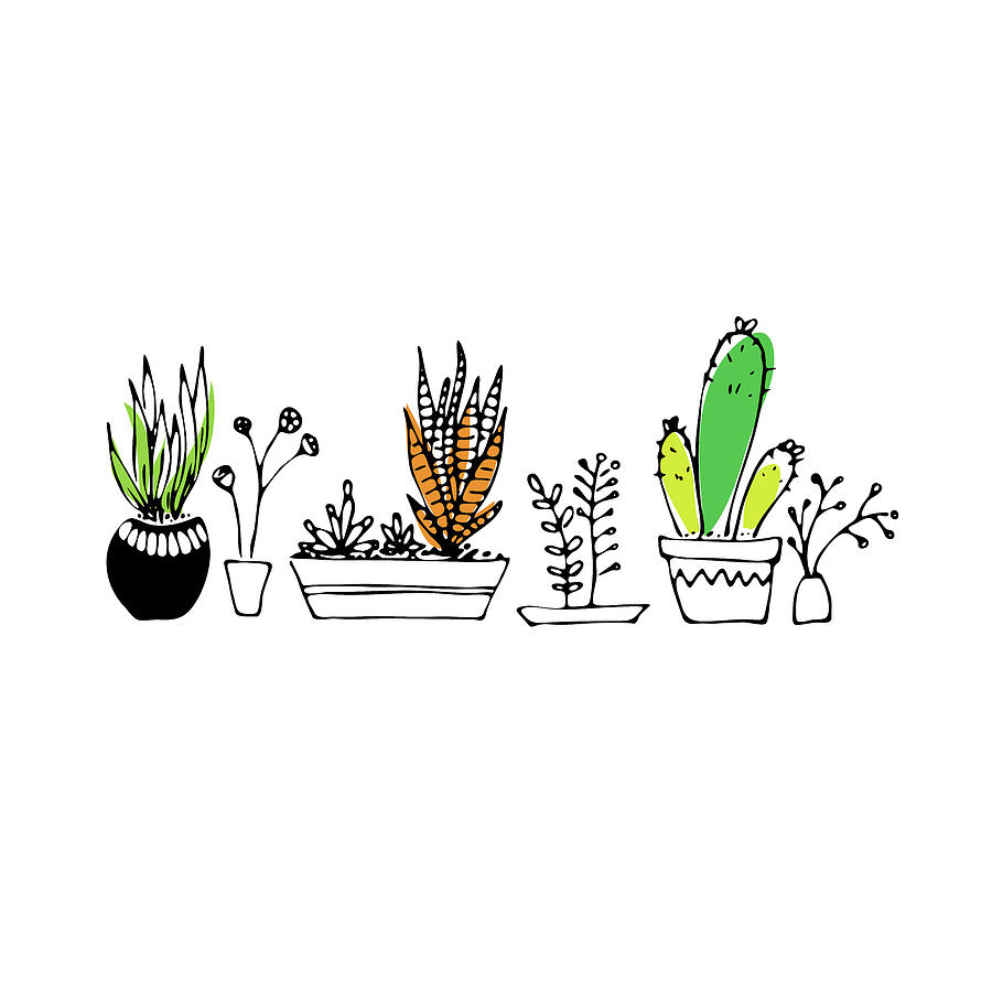 Succulents by Jocelyn Friis