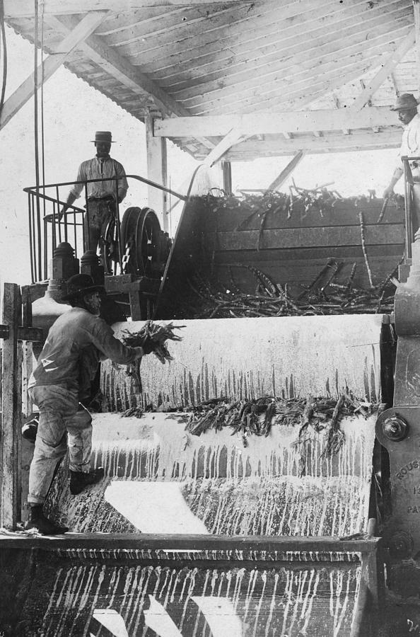 Sugar Crushing Photograph by Spencer Arnold Collection