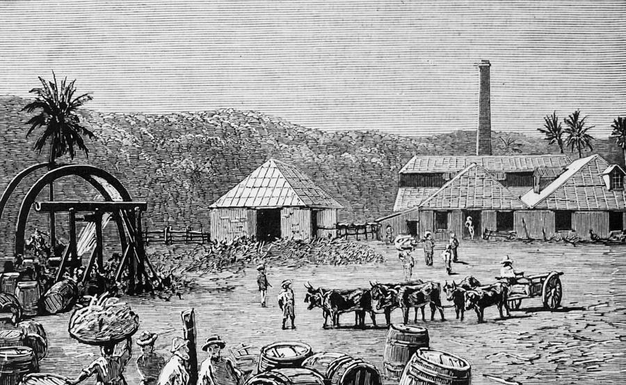 Sugar Mills Photograph by Hulton Archive
